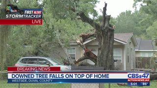 Downed tree falls on top of home