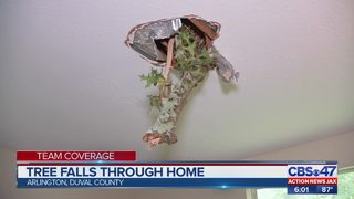 Tree falls through home