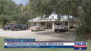 Veteran shoots dog attacking service dog