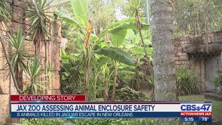 Jax zoo assessing animal enclosure safety