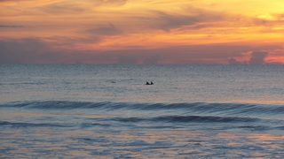 Images: Dolphin chasing fish at sunrise in Jacksonville Beach