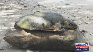 Neighbors outraged after turtle found wrapped in fishing line