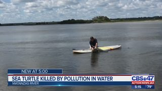 Sea Turtle killed by pollution in water