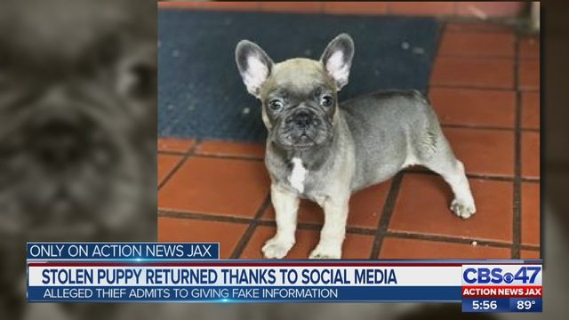 french bulldog stolen by woman who vowed to love it to death