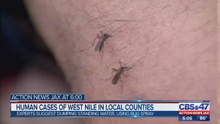 Jacksonville health officials: New cases of West Nile in humans