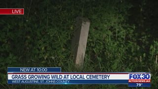 Grass growing wild at local cemetery