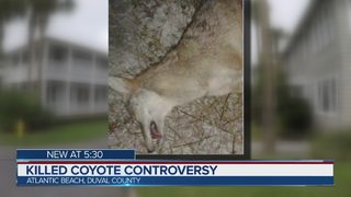Killed coyote controversy