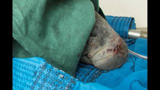 Rescued manatee being treated at Jacksonville Zoo
