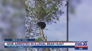 Report: 9 people arrested after bears lured with food and attacked by dogs