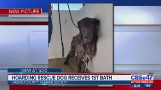 Hoarding rescue dogs recovering locally in Nassau County
