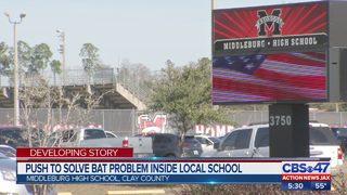 Push to solve bat problem inside local school