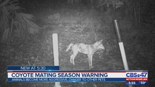 Coyote season is in effect through March, how to protect your pets