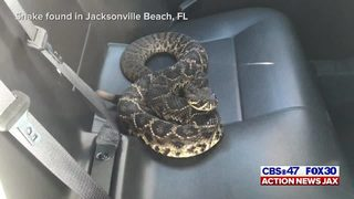 Raw video: Rattlesnake in the back of Jacksonville Beach Police car