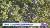 Extra steps for Oak pollen allergy relief