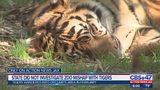 State did not investigate Jacksonville Zoo mishap with tigers