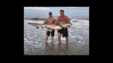 A stunning and inspiring sight in Atlantic Beach, as two men risked their own limbs to return a large shark to the ocean.