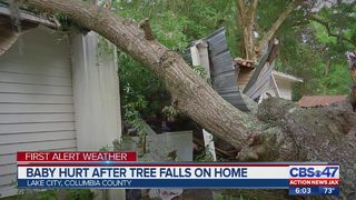Baby hurt when tree falls on home near Lake City