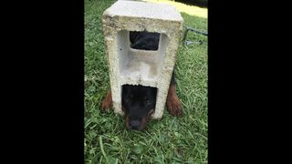 St. Johns County Fire and Rescue saves 6-month-old puppy from cinder block