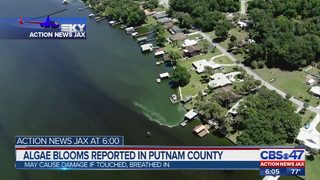 Local algae blooms reported in St. Johns river