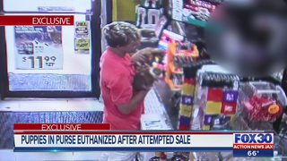 Puppies in purse euthanized after attempted sale