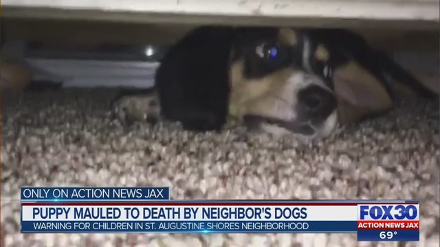 e3d4a79d AUGUSTINE PUPPY MAULED: Family's puppy killed by neighbor's two dogs |  WJAX-TV