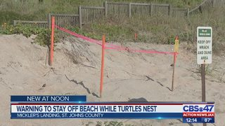 Warning to stay off beach while turtles nest