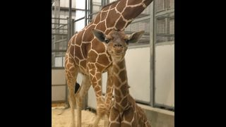 PHOTOS: Baby boom at the Jacksonville Zoo