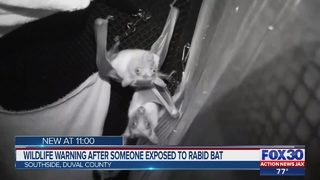 Duval County resident exposed to rabid bat