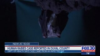 Human rabies case contracted from an infected bat reported in Duval County