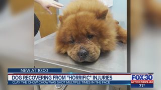"""Dog recovering from """"horrific"""" injuries"""
