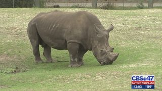 OSHA citing Jacksonville zoo for rhino attack
