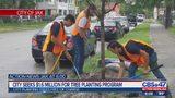 City seeks $1.6 million for tree planting program