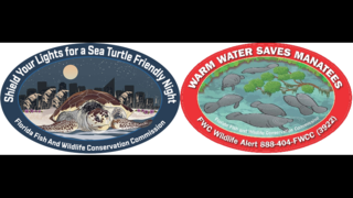 FWC releases 2019 sea turtle, manatee decals