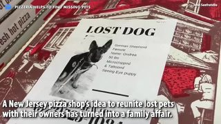 Your Daily Pitch News Minute: Pizzeria helps to find missing pets