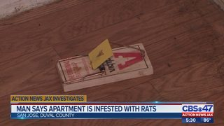 Man says apartment is infested with rats