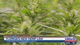 Florida's new hemp law causing confusion over marijuana legality