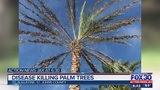 Deadly palm disease spreading throughout Northeast Florida