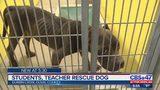 Students, teacher rescue dog