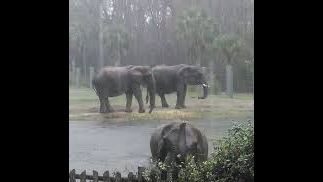 HURRICANE DORIAN: Jacksonville Zoo and Gardens closes ahead