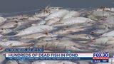 Hundred of dead fish in Atlantic Beach pond